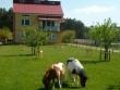 Foto 2450 - Zwierzyniec - Agroturystyka Krystyna Antonik