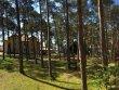 Foto 43876 - Dziwnówek - Czarny Bursztyn