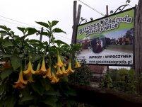 Gościnna Zagroda Agroturystyka Gościejowice Niemodlin - zdjęcie główne