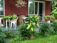 Dom Wypoczynkowy Alga - zdjęcie główne